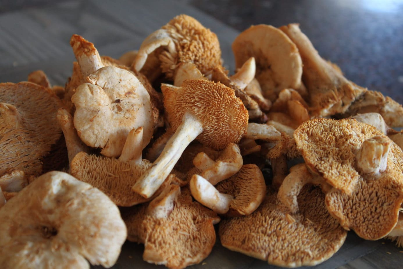 Fresh hedgehog mushrooms