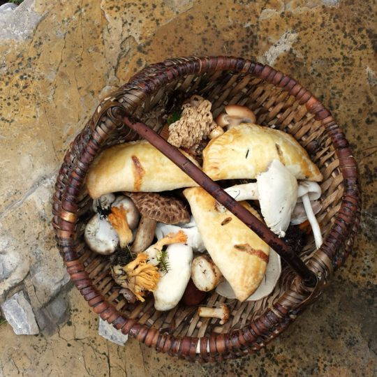 Delicious and Portable Mushroom Hand Pies for the discerning Forager or Picnic-er #handpies #foraging #mushroomhandpies