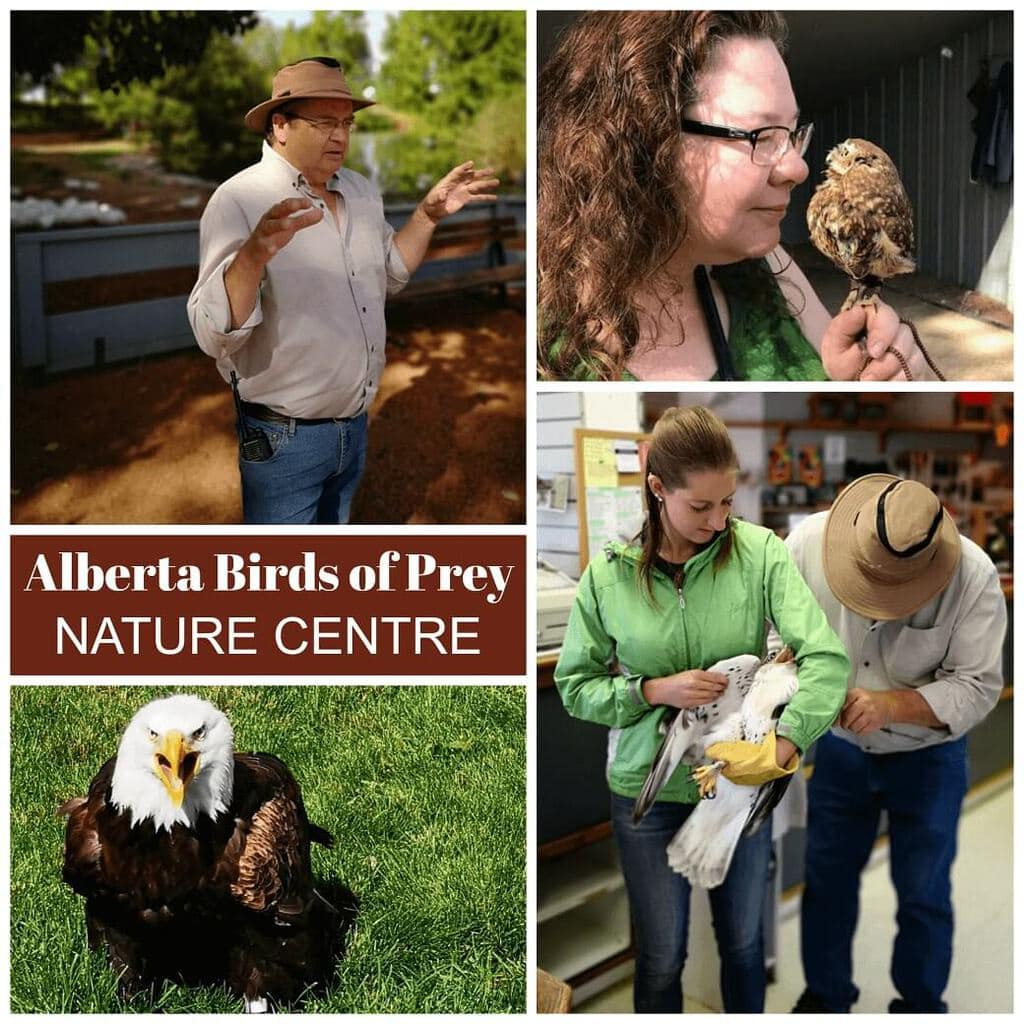 Scenes from a Alberta Birds of Prey rescue centre.