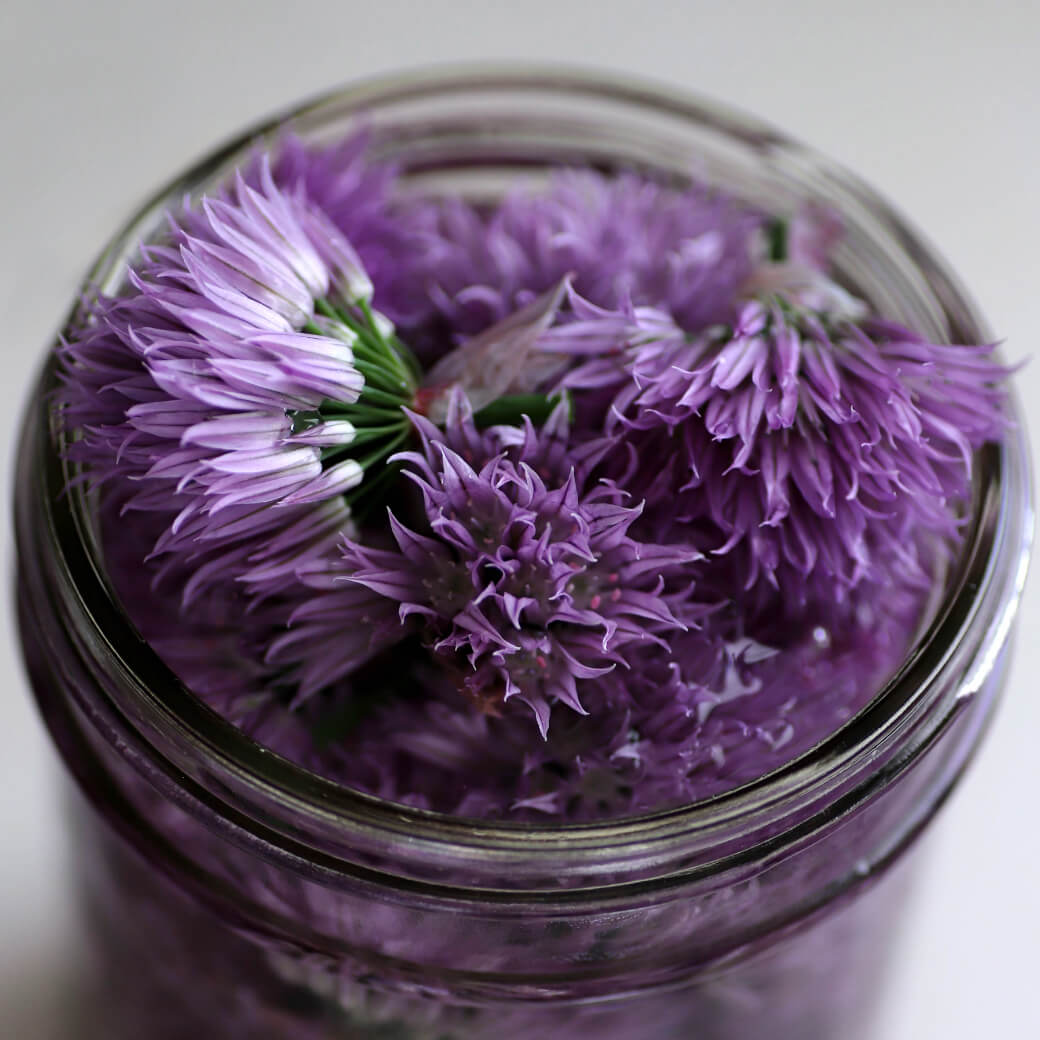 Purple chive blossoms and vinegar in a glass jar.