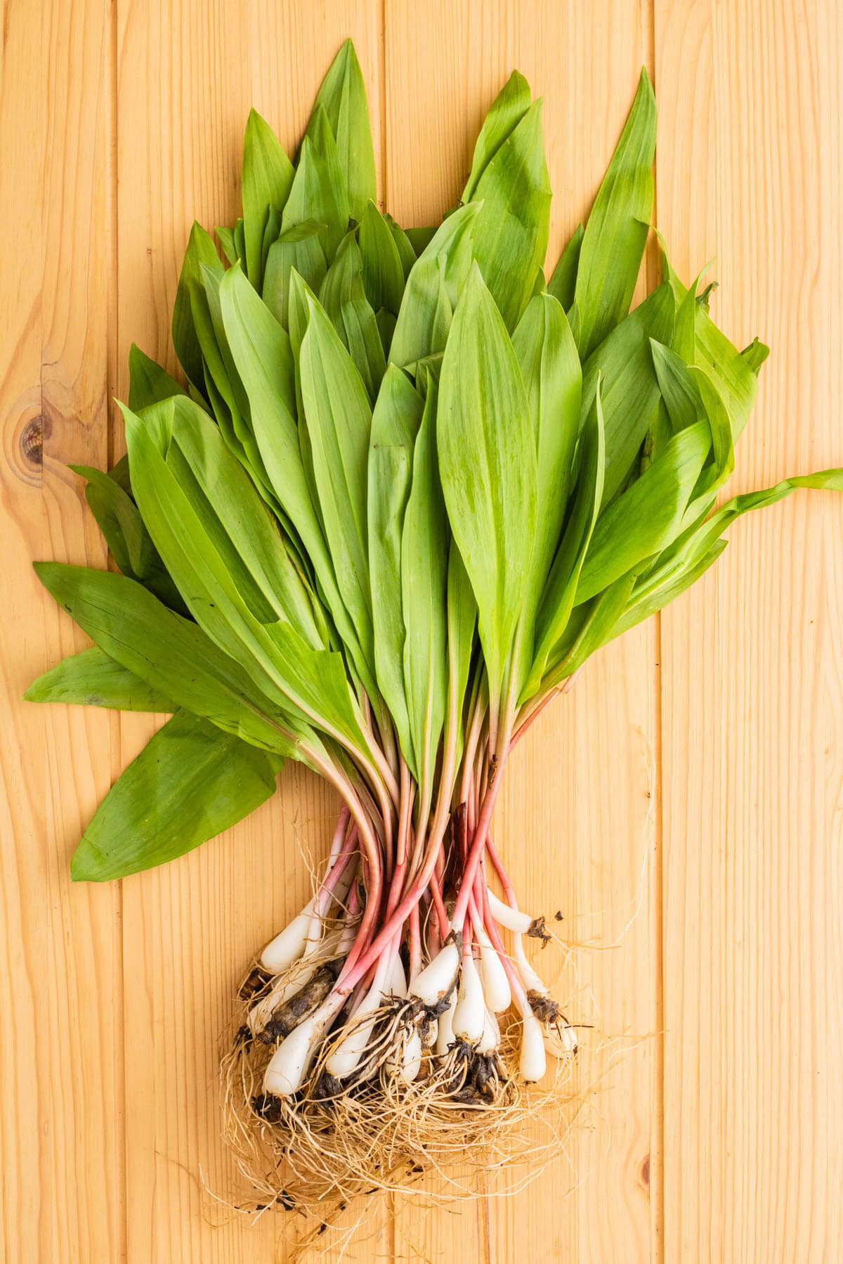 A bunch of wild ramps, root attached.