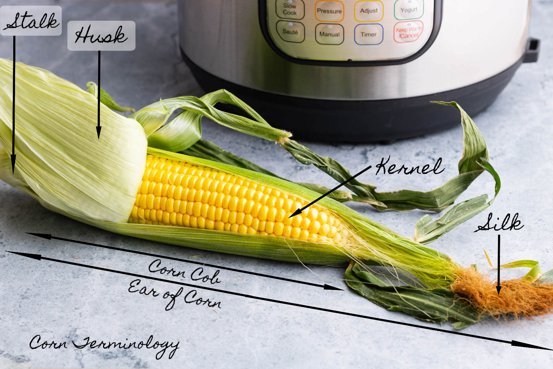 A half shucked ear of corn labelled with names of each part.
